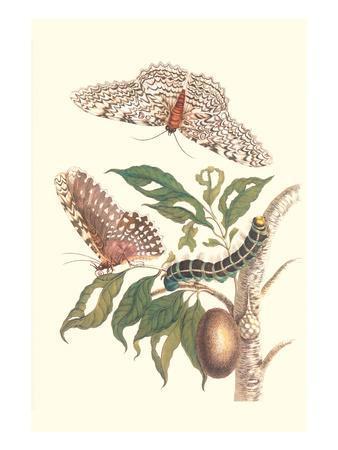 Limbo Tree with Owlet Moth-Maria Sibylla Merian-Art Print