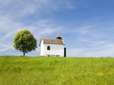 Lime tree and tiny white chapel in rural meadow-Frank Lukasseck-Photographic Print