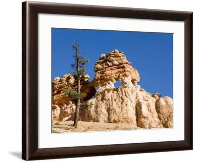 Limestone Formation, Bryce Canyon National Park, Utah, USA-Tom Norring-Framed Photographic Print