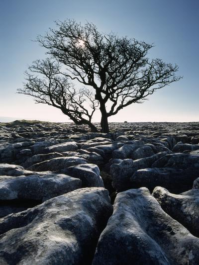 Limestone Pavement at Twisleton Scars, Yorkshire Dales National Park,North Yorkshire,England,Uk-Design Pics Inc-Photographic Print