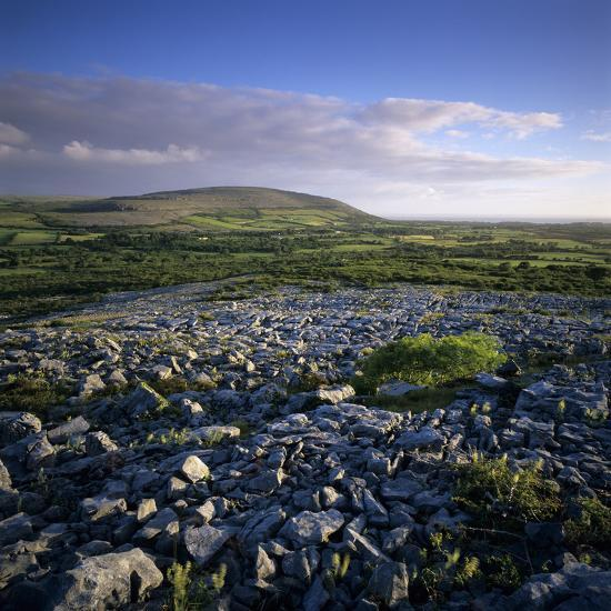 Limestone Pavement, the Burren, County Clare, Munster, Republic of Ireland, Europe-Stuart Black-Photographic Print