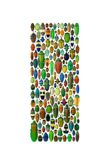 Limited Coleoptera Mosaic-Christopher Marley-Photographic Print