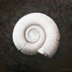 Amononite, 2012 by Lincoln Seligman