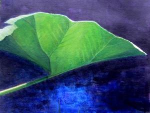 Gunnera Leaf by Lincoln Seligman