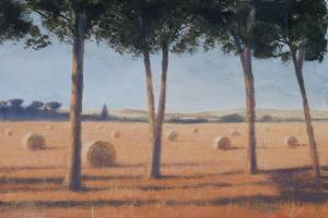 Hay Bales and Pines, Pienza, 2012 by Lincoln Seligman