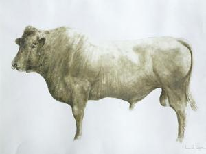 Islay Bull, 2004 by Lincoln Seligman