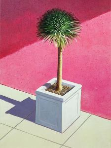 Small Palm, 1995 by Lincoln Seligman