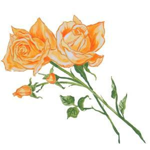 Floral IV by Linda Baliko