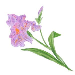 Floral VI by Linda Baliko