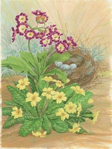 Auricula, Primrose and Nest, 1998 by Linda Benton