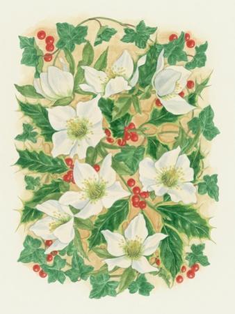 Christmas Roses, 1997 by Linda Benton