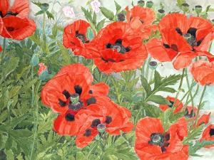 Poppies by Linda Benton