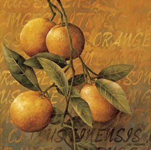 Orange Branch by Linda Thompson