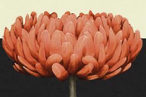 Apricot Flame II by Linda Wood
