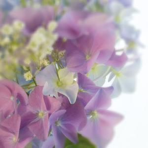 Hydrangea Haze I by Linda Wood