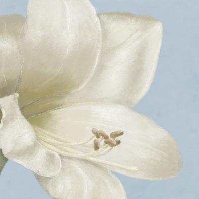 White Amarylis I