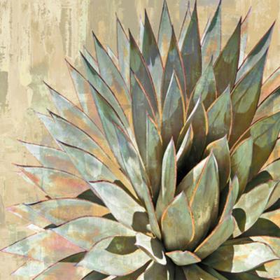 Succulent I by Lindsay Benson