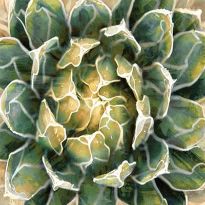 Succulent III by Lindsay Benson