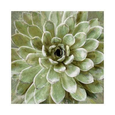 Succulent Verde II