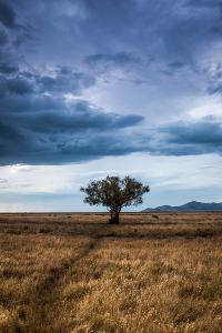 A Game Trail Leads To A Lone Tree Near The Great Salt Lake, Utah by Lindsay Daniels