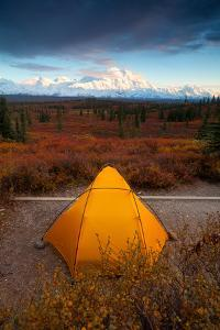 Camping In Denali National Park, With Denali In Background by Lindsay Daniels