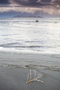 Salty Tumble Weed In The Great Salt Lake With Antelope Island In The Background by Lindsay Daniels