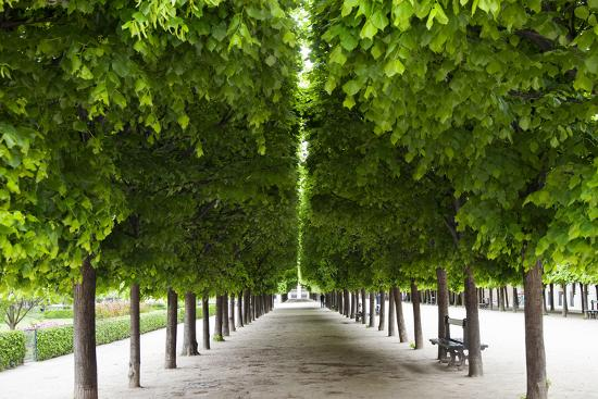 Line of manicured trees in the garden of Palais Royal, Paris, France-Brian Jannsen-Photographic Print