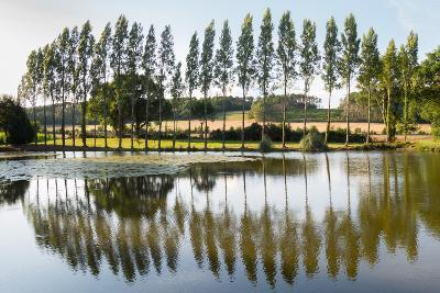 Line Of Trees Reflected-Charles Bowman-Photographic Print