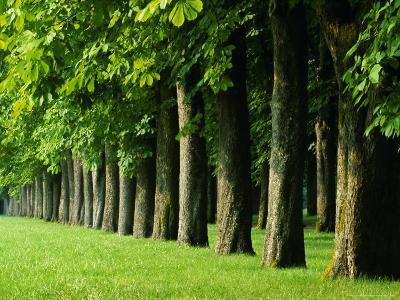 Line of Trees, Touraine, Centre, France, Europe-Sylvain Grandadam-Photographic Print