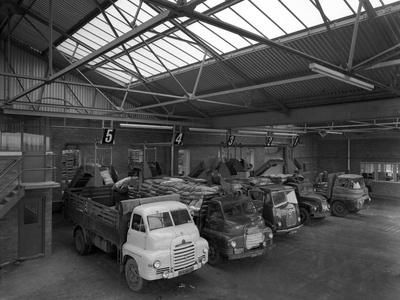 Line Up of 1950S Lorries at Spillers Animal Foods, Gainsborough, Lincolnshire, 1961-Michael Walters-Photographic Print