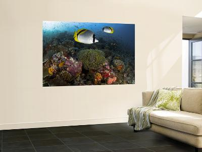 Lined Butterflyfish Swim Over Reef Corals, Komodo National Park, Indonesia-Jones-Shimlock-Wall Mural