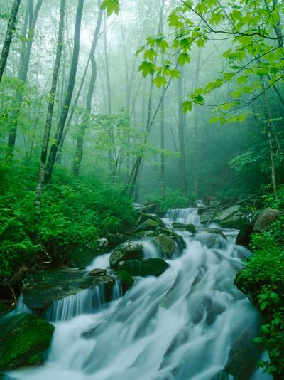 Linn Cove Creek Cascading Through Foggy Forest, Blue Ridge Parkway, North Carolina, USA-Adam Jones-Photographic Print