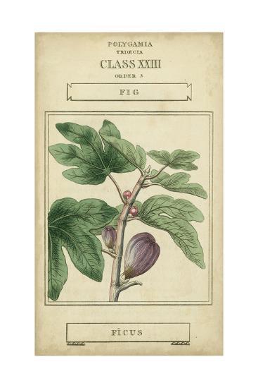 Linnaean Botany VI-Vision Studio-Art Print