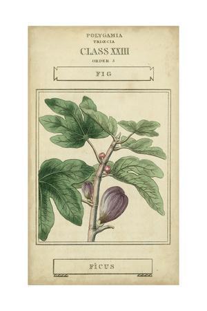 https://imgc.artprintimages.com/img/print/linnaean-botany-vi_u-l-pyvzuk0.jpg?p=0