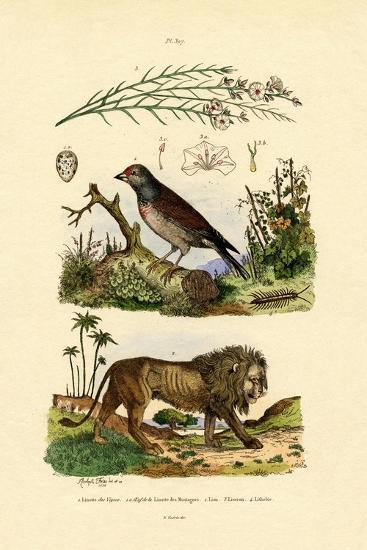 Linnet, 1833-39--Giclee Print