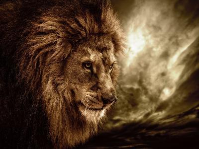 Lion Against Stormy Sky-NejroN Photo-Photographic Print