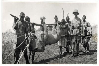 Lion at Bahr El Ghazal, Am Dafok, 1925-Georges-Marie Haardt-Giclee Print