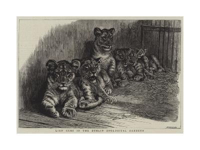 Lion Cubs in the Dublin Zoological Gardens--Giclee Print