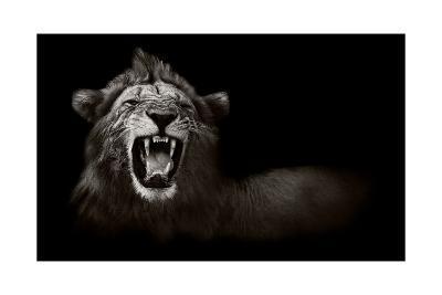 Lion Displaying Dangerous Teeth-Donvanstaden-Art Print
