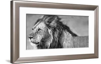 Lion Eyes-Xavier Ortega-Framed Photographic Print