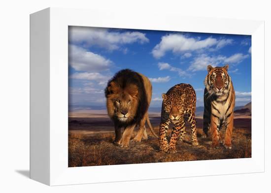 Lion, Jaguar, and Tiger-DLILLC-Framed Premier Image Canvas