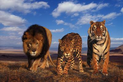 Lion, Jaguar, and Tiger-DLILLC-Photographic Print