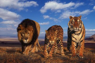 https://imgc.artprintimages.com/img/print/lion-jaguar-and-tiger_u-l-pzrisf0.jpg?p=0