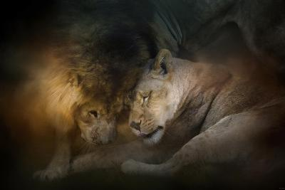Lion Love-Jai Johnson-Giclee Print