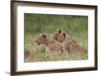 Lion (Panthera Leo) Cubs, Ngorongoro Crater, Tanzania, East Africa, Africa-James Hager-Framed Photographic Print