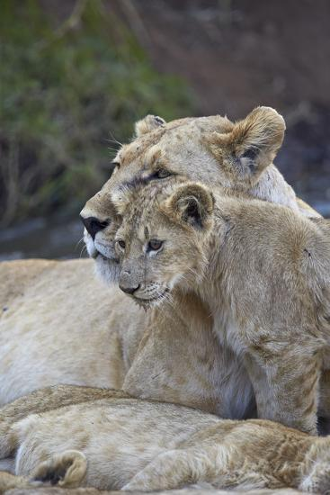 Lion (Panthera Leo) Female and Cub, Ngorongoro Crater, Tanzania, East Africa, Africa-James Hager-Photographic Print