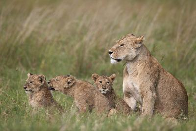 Lion (Panthera Leo) Female and Three Cubs, Ngorongoro Crater, Tanzania, East Africa, Africa-James Hager-Photographic Print