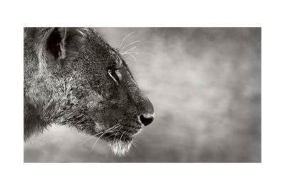 Lion Side View-Donvanstaden-Art Print