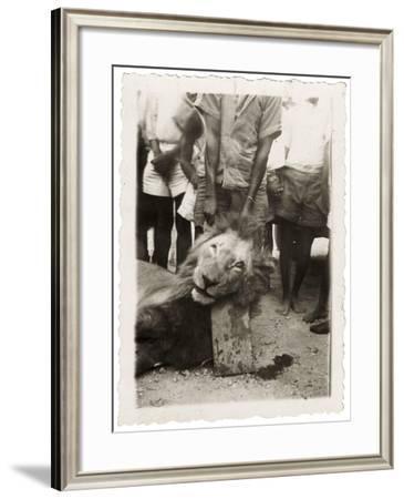 Lion Tué À La Mission de Luashi, c.1940--Framed Giclee Print