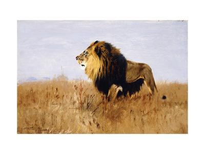 Lion Watching for Prey-Wilhelm Kuhnert-Giclee Print